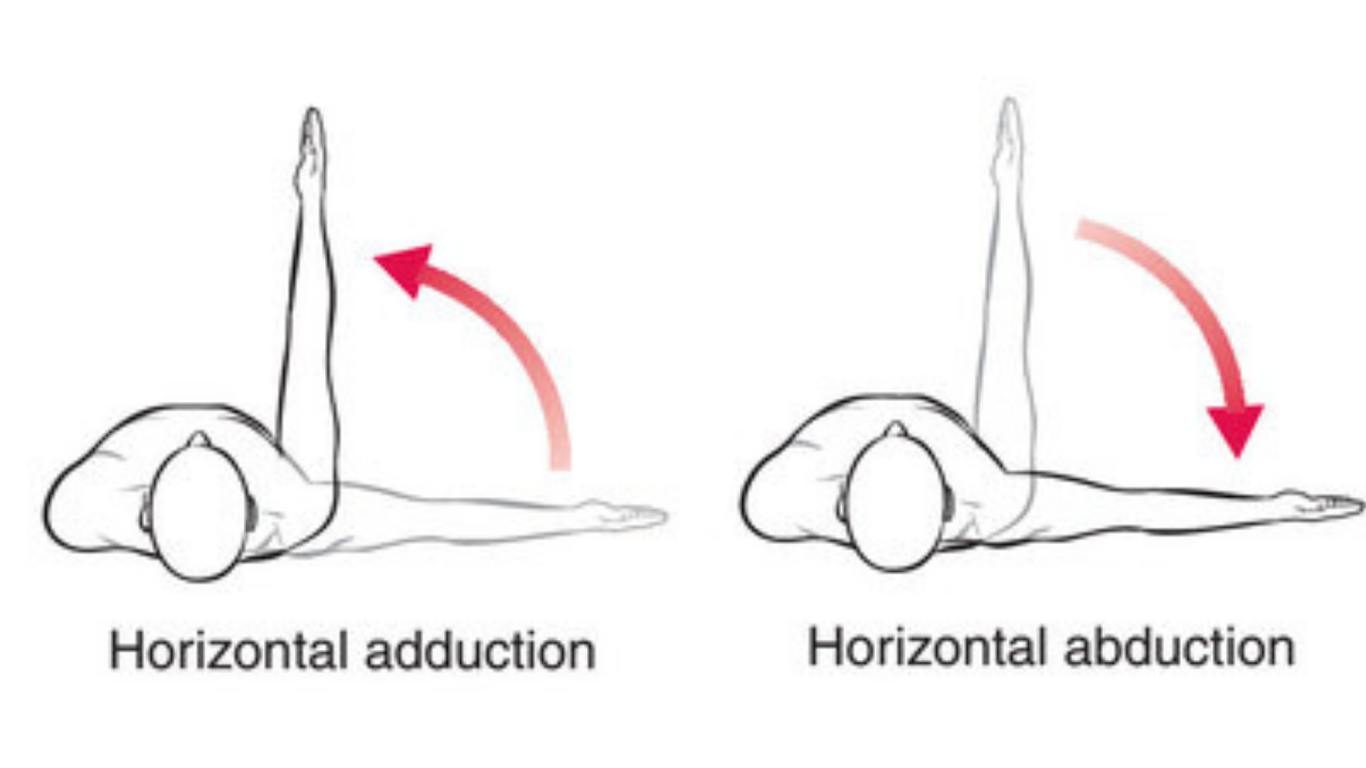 abduction_and_adduction_of_the_legs