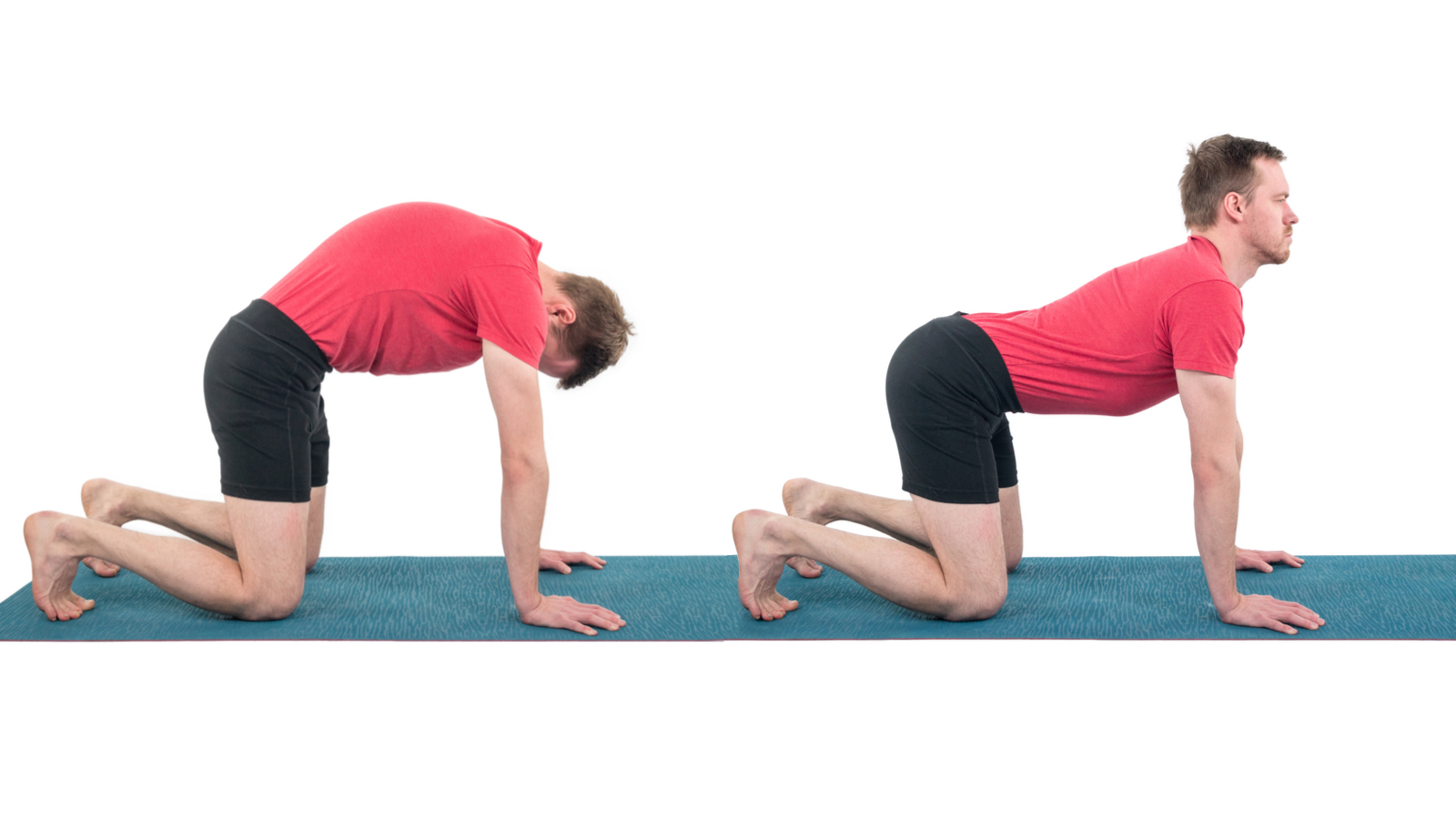 Cat-Cow Pose, Marjayasana-Bitilasana, beginner's yoga, yoga basics, yoga for pelvic health