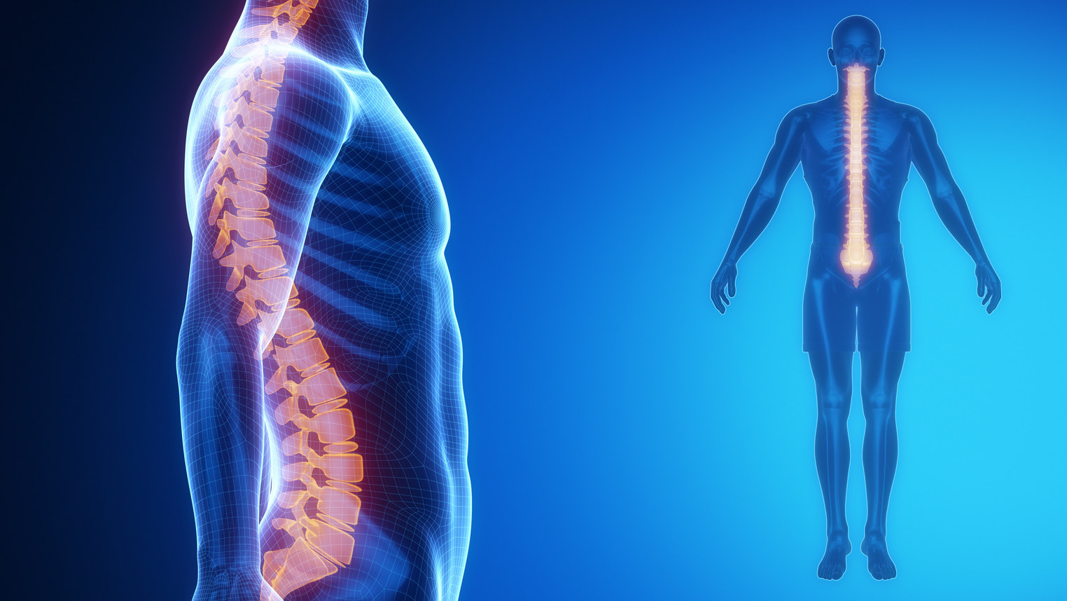 Spine, Anatomy, Posture, Aging, As young as your spine