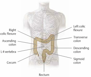 Digestive Health, Digestion anatomy, Constipation, yoga for better digestion, twists in yoga, twisting for better digestion