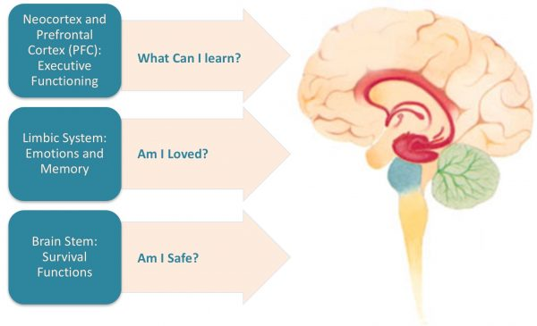 the brain, managing vagal nerve disorders, practices to overcome stress and trauma