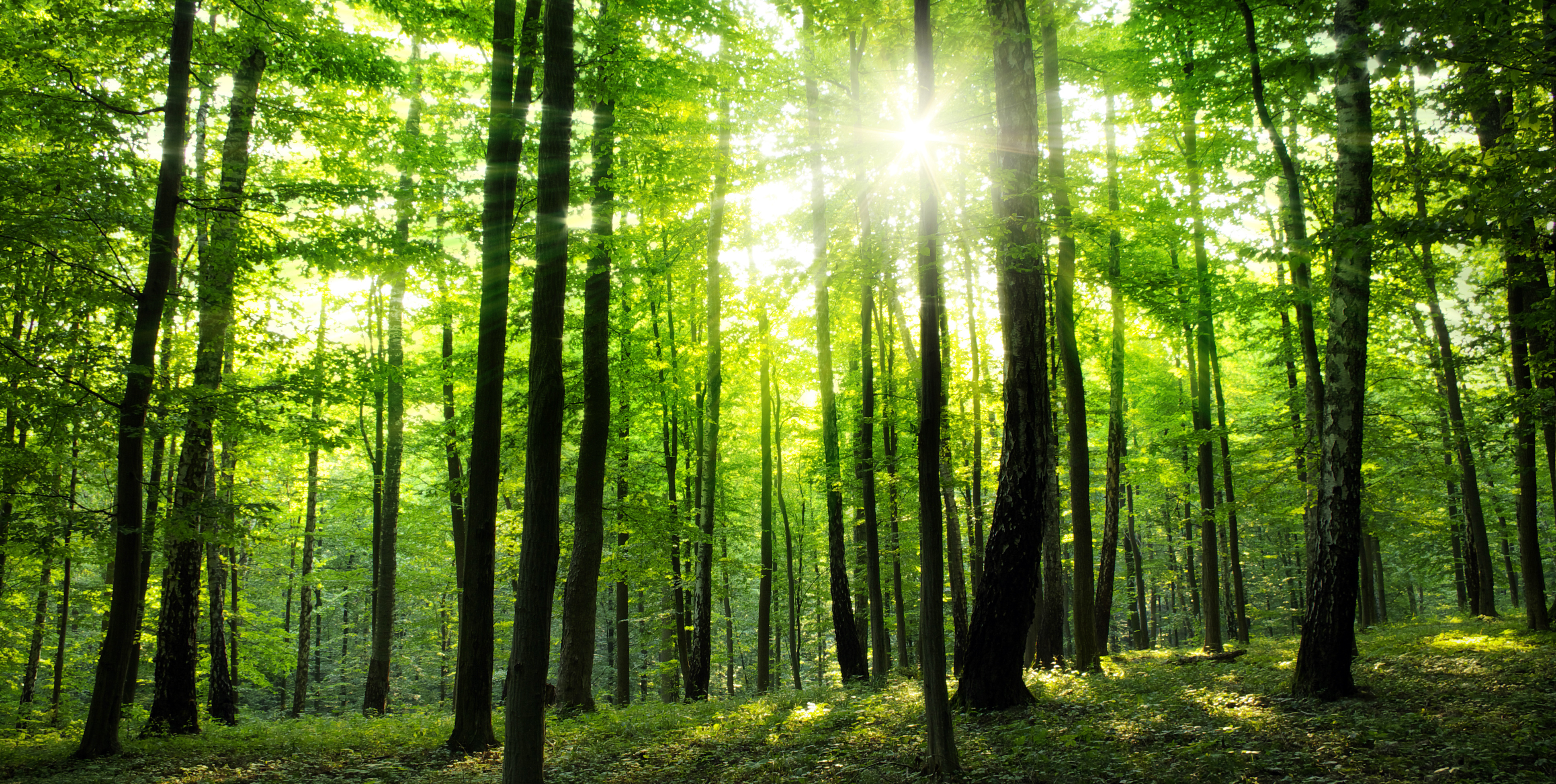 Trees, Forest, Nature, Healing in Nature, Forest bathing for health and well-being