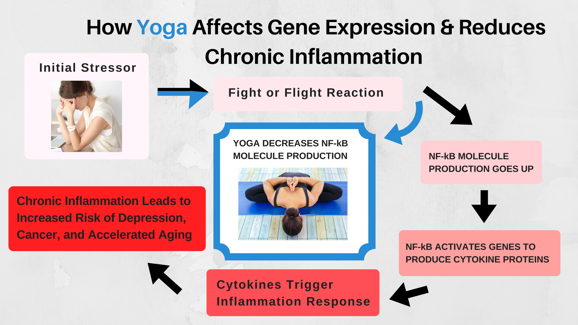 A diagram showing how yoga affects gene expression and chronic inflammation