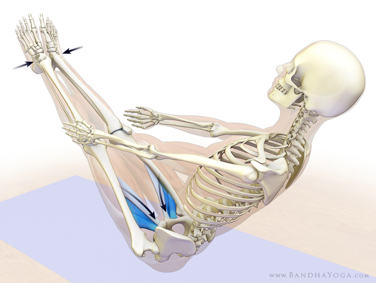 Navasana, Boat Pose, Core Strengthening, engaging longus,brevis and pectineus poses for a strong core