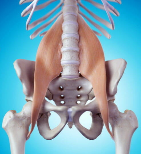 Psoas Muscle, flexes hips. rotates hips, yoga anatomy, pain reduction, core strength