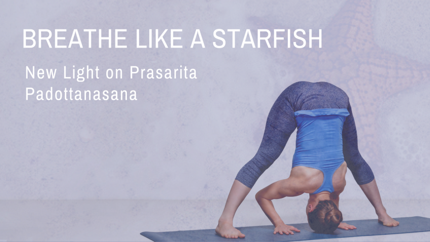 Wide, Legged, Standing, Forward, Fold, grounding, standing, asana, symmetrical, stance, yoga, stretch, inversion, decompress the spine, beginner, Prasarita, Padottanasana