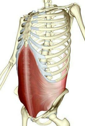 Transverse abdominus, core musculature, posture, anatomy, core strength for improved posture